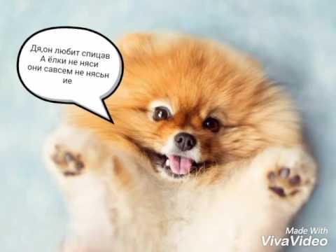 Смешные собаки (110 фото) -