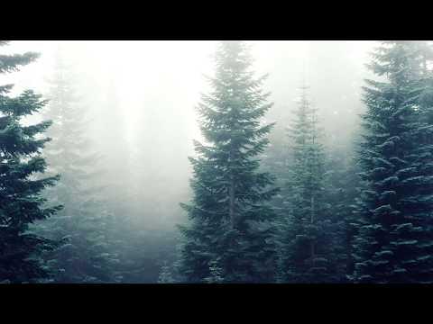 Woolookologie - Forest