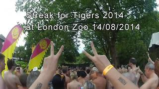 Streak for Tigers 2014 at London Zoo
