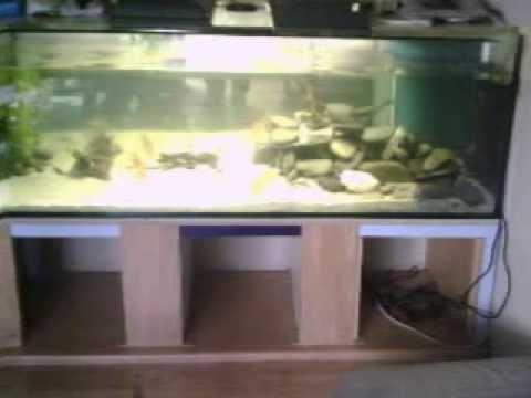 650 liter aquarium youtube. Black Bedroom Furniture Sets. Home Design Ideas