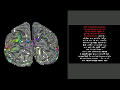Neuroimaging reveals detailed semantic maps across human cerebral cortex - Science Nation