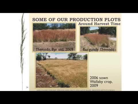 Native grasses - a small property case study by Bob Myers, Native Grass Resources Group