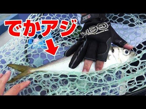 東京湾で「デカアジ」釣れた‼