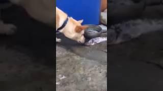 Самая добрая собака в Мире! Трогательное видео.