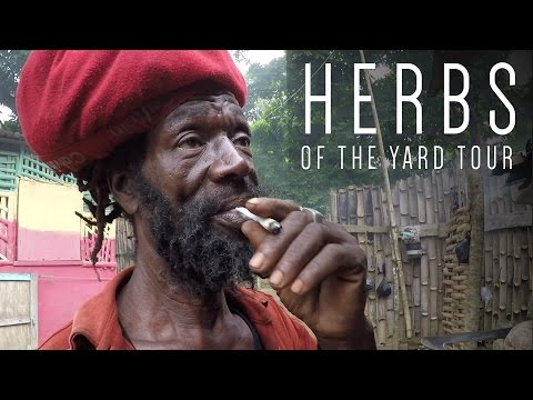 Herbs of the Yard Tour