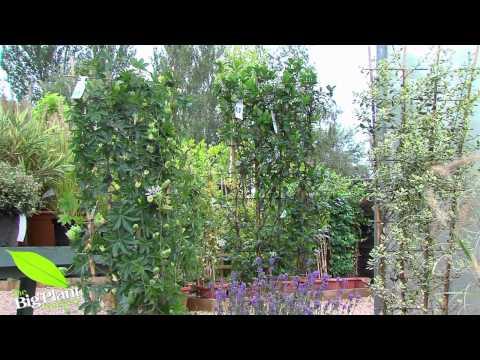 The Big Plant Nursery