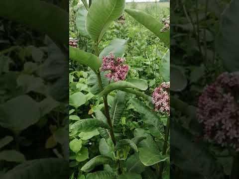 Вопрос: Подскажите, что за растение?