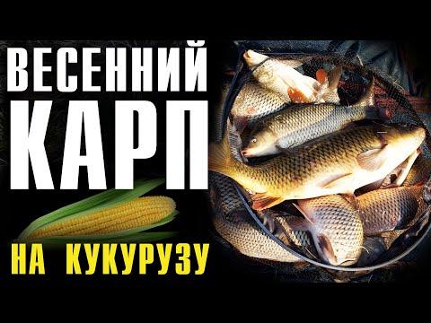 Ловля КАРПА ранней весной на кукурузу, ФЛЭТ ФИДЕР 2020