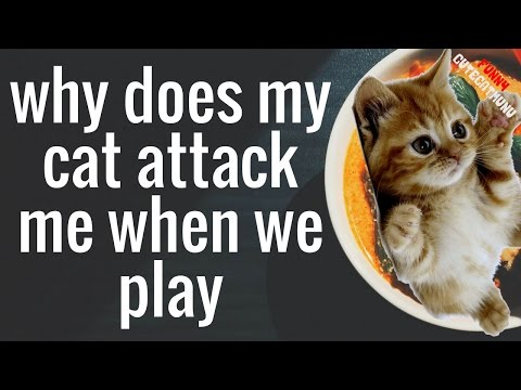 **why does my cat attack me when we play|Cat Attack Funny Video**