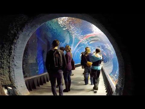 Oceanarium Afrykarium Wroclaw Poland WALKING TOUR HD 1080p