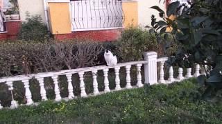 видео Турция, февраль, 2017