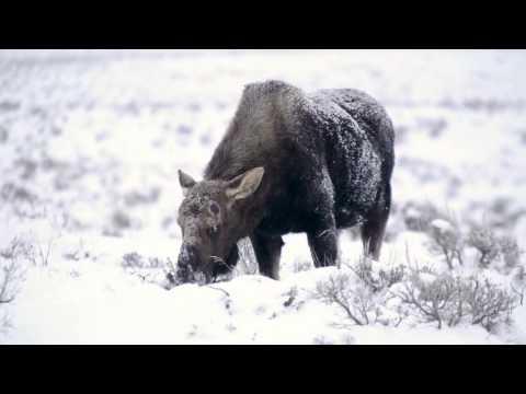 Four Seasons Jackson Hole - An Exhilirating Winter Retreat