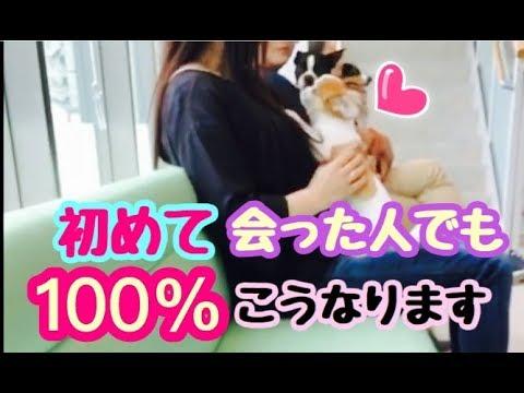 【犬】ヒヤヒヤするぐらい全く人見知りしないチワワ【かわいい犬】【chihuahua】【cute dog】【チワワ】
