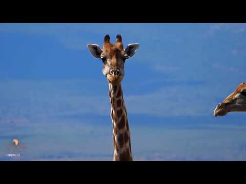 Hunting In South Africa|African Hope Hunting Safaris 2018