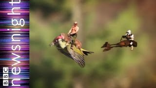 Woodpecker and weasel - a Newsnight spiked playout