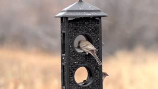 Perky-pet® Fly Through Wild Bird Feeder