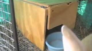 HOMESTEADING - Rabbit Nest Boxes