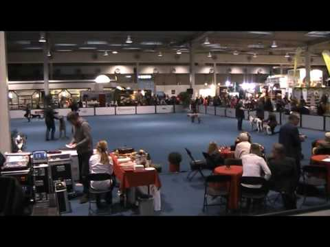Rasse  Hunde  Ausstellung  Hannover   323
