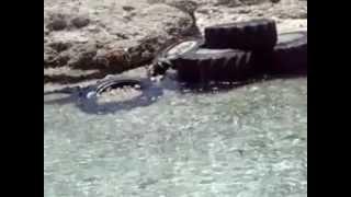 Крит июнь 2012 Видео.mp4(, 2012-07-01T16:52:00.000Z)