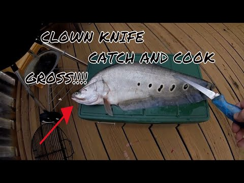 Catch and Cook  clown knife fish  Catch and cook catch and cook