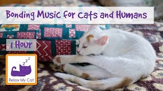 Bond with your Cat through Music! Relaxation Music to Strengthen the Bond Between you and your Cat!