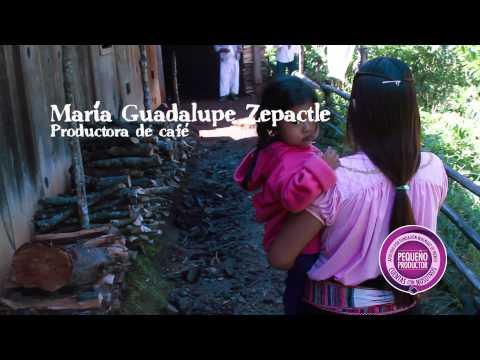 Comunidades productoras de café en Veracruz, mejoran la vida de sus familias