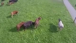 Ferien auf dem Bauernhof Vorrüti in Wuppenau bei Langenegger bauernhofferien-vorueti.ch