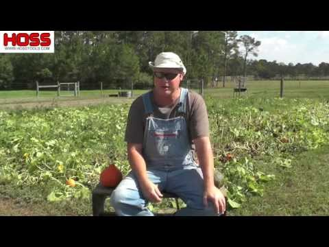 the-best-winter-squash-varieties-to-grow