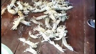 lobster farming in tanks indoor lobster farming lobster farming lobster crab