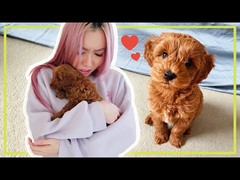 Surprising her with a puppy *SHE CRY*
