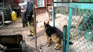 Харьков. Отдых после работы в приюте для животных.AVI
