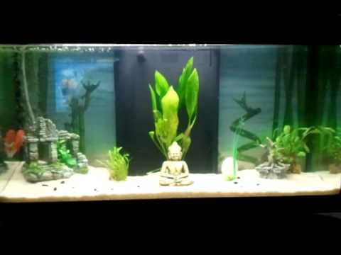 mon aquarium ambiance zen youtube. Black Bedroom Furniture Sets. Home Design Ideas