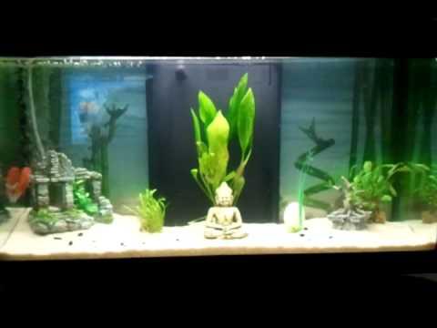 Mon aquarium ambiance zen youtube for Zen fish tank