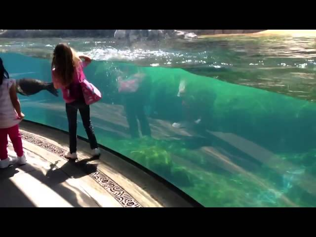 Sea Lion reacts when little girl falls
