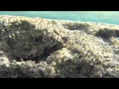 Rotes Meer Fisch - Red Sea Fish - CC BY-NC-SA Royalty Free