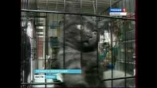 Верные друзья из Ленинска-Кузнецкого