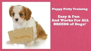 How To Potty Train A Puppy An Easy & Proven Solution To Potty Train Your Puppy