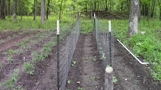 Homesteading: Putting Up Trellis In The Garden