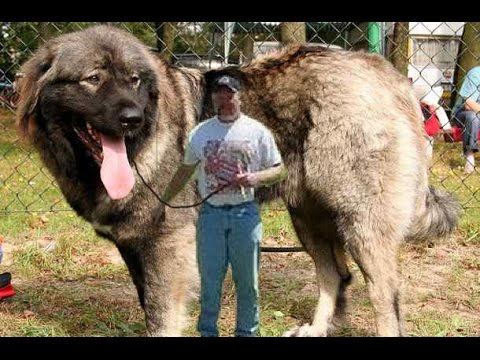 Top  Meanest Dog Breeds In The World
