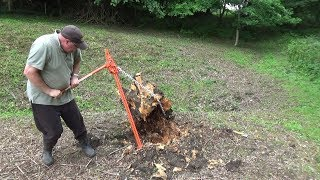 Pulling up a Large Old Stump with a Farm Jack