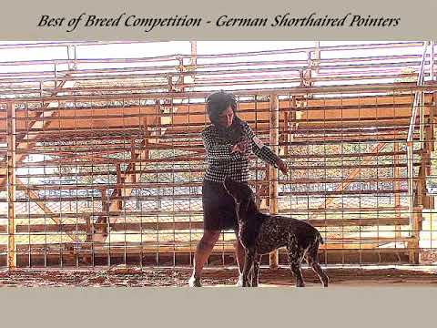 10-29-2017 Saline County Kennel Club-German Shorthaired Pointers