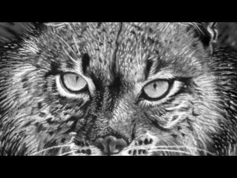 Iberian Lynx :: Creative Drawing Process