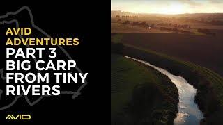 Avid Adventures Part 3- Big Carp From Tiny Rivers