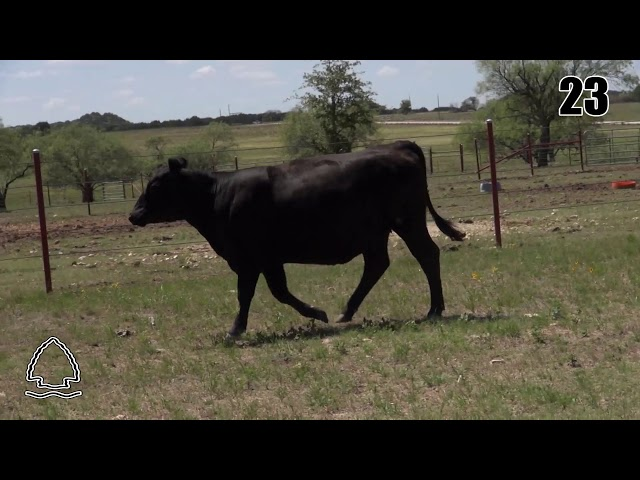 Pearcy Angus Ranch Lot 23