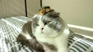 엄마 아빠 장난질에 체념한 고양이