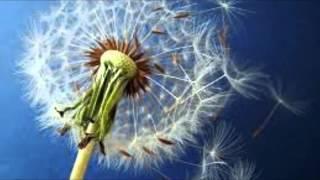 ВДВ Армейская песня - Десантники (Одуванчики)(, 2014-02-25T13:17:58.000Z)