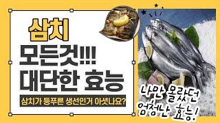 삼치의 모든것! 겨울철 생선, 삼치는 등푸른생선이다! …