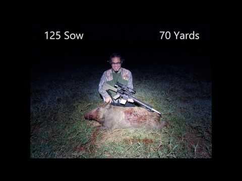 Does Calling Hogs Work? - Thermal Hog Hunt