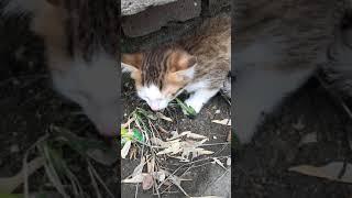 21 апреля 2019 найдены котята