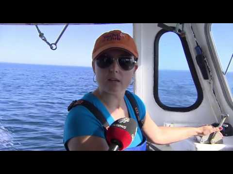 More women becoming captains in P.E.I. lobster fishery